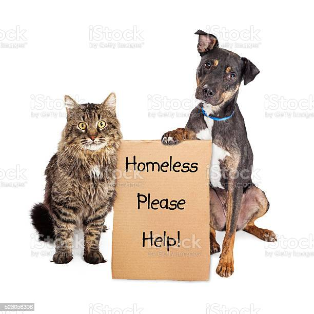 Homeless dog and cat with sign picture id523058306?b=1&k=6&m=523058306&s=612x612&h=hbnwy hihbibae1eqw3bzmwezvf wdacrlbjtt owww=