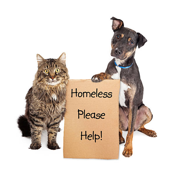 Homeless Dog and Cat With Sign stock photo