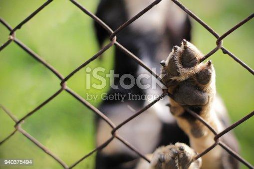 istock Homeless dog behind bars. Animal sanctuary. 940375494