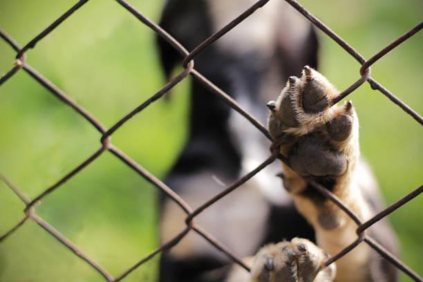 dakloze hond achter de tralies. dierlijke heiligdom. - kooi stockfoto's en -beelden