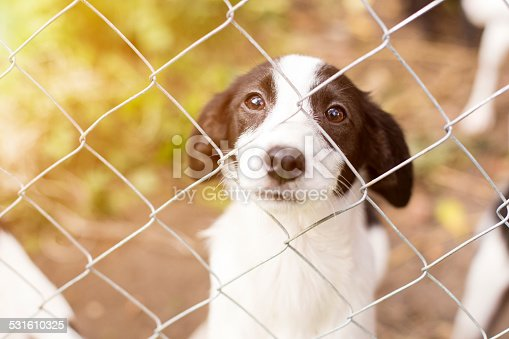 Homeless dog behind bars in an animal shelter.