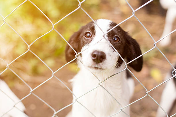 Homeless dog behind bars Homeless dog behind bars in an animal shelter. sheltering stock pictures, royalty-free photos & images