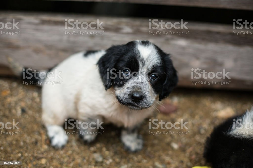 Homeless dog is waiting to its new owner and new home stock photo
