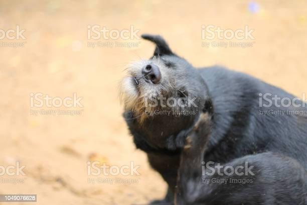 Homeless dog scratches himself behind the ear picture id1049076628?b=1&k=6&m=1049076628&s=612x612&h=ehmkgxqvnanvxcdyo9m4x8awlvdgtz  7xvx97n5jmk=