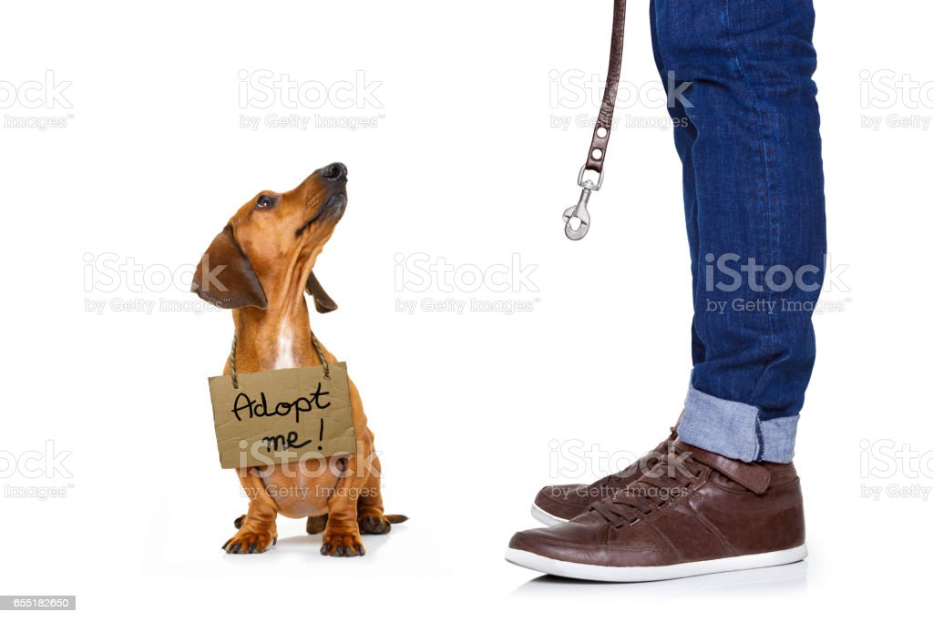 homeless dog to adopt stock photo