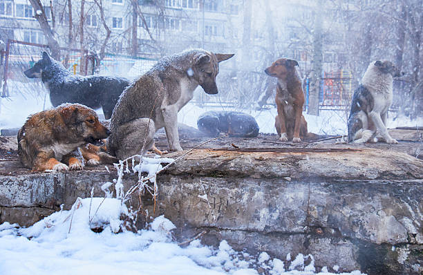 Homeless dogs in winter – Foto