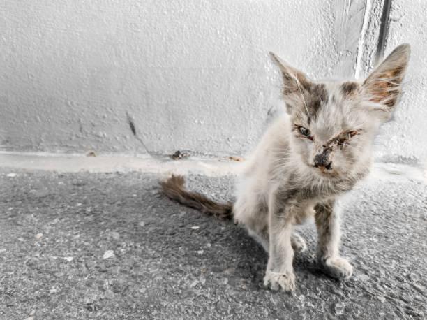 homeless hungry cat - desperdício alimentar imagens e fotografias de stock