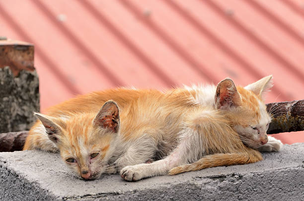 Homeless kitten picture id155096695?b=1&k=6&m=155096695&s=612x612&w=0&h=hmihg4ues jeyc9rwcywgtmj0qwxpnltvlvycpnuyou=