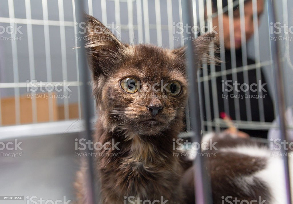 Homeless kitten sitting in a cage at the shelter. Pets stock photo