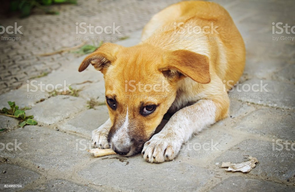 Homeless little puppy stock photo