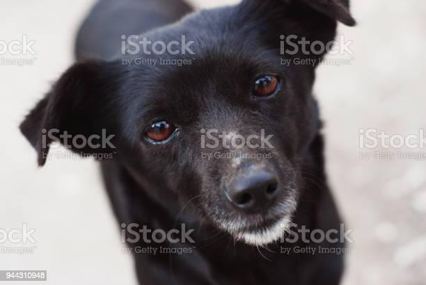 Homeless lonely black puppy stray dog face with lonely eyes picture id944310948?b=1&k=6&m=944310948&s=612x612&h= v q4vpocbknwoz7jutjvdwf0dfzbxyu83c q7yug y=