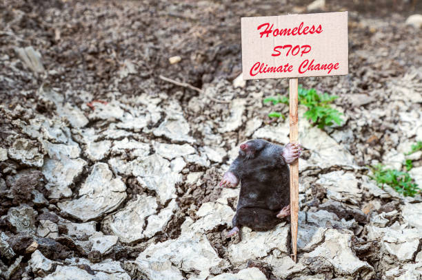 Homeless mole by climate change. stock photo