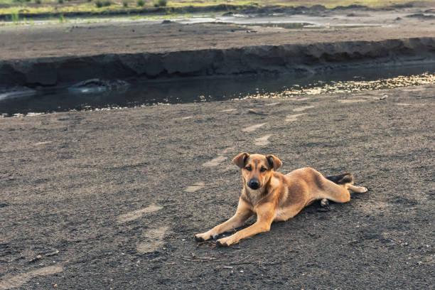 obdachlose mischling hund sucht für sie - hunde aus dem tierheim stock-fotos und bilder