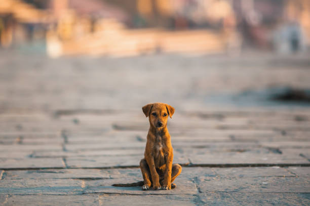 homeless puppy dog sitting alone in the middle of the street. - lost стоковые фото и изображения