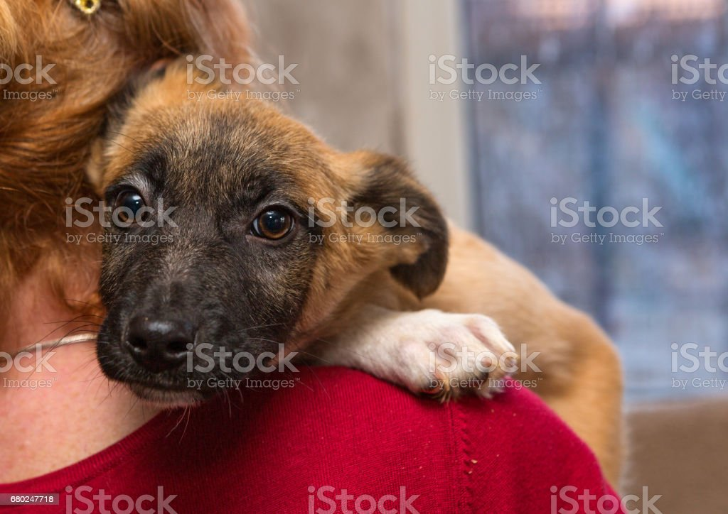 Homeless puppy from a shelter stock photo