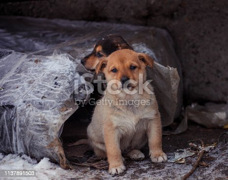istock homeless puppy his home 1137891503