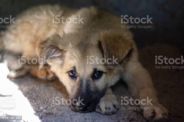 Homeless puppy picture id1181451457?b=1&k=6&m=1181451457&s=612x612&h=khdhmfdt8um5ty1l tcmvraq6neqelylwbgot854ata=