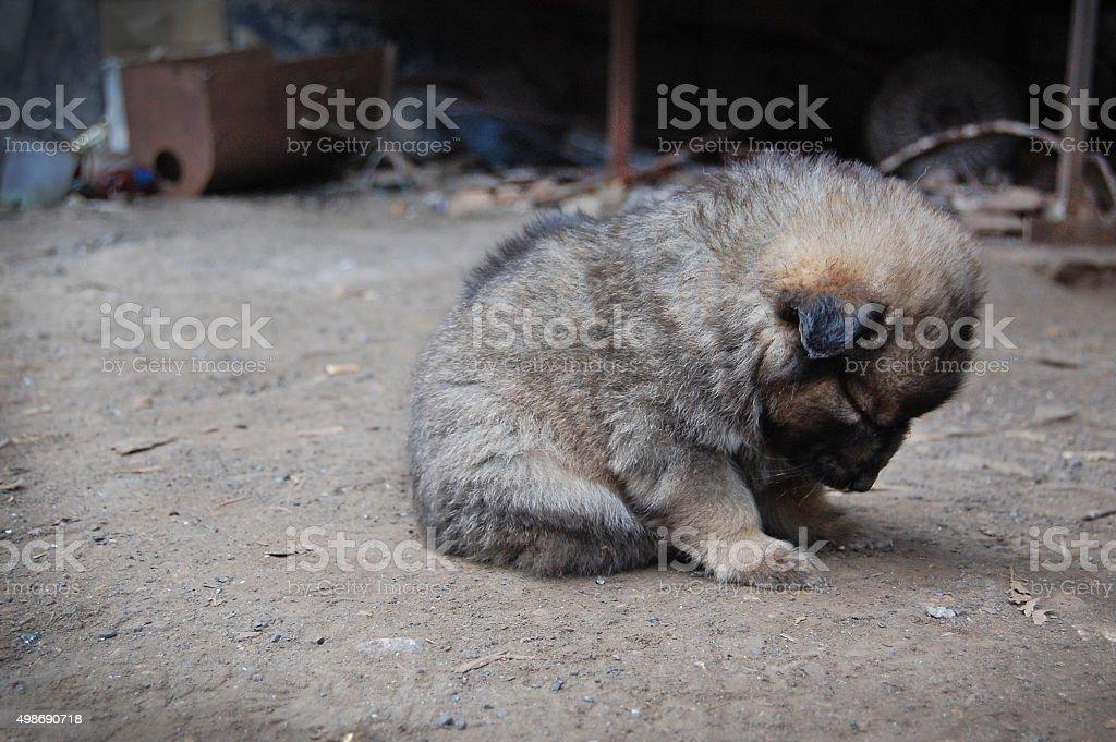 Homeless puppy stock photo