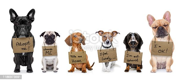 lost  and homeless  row of dogs  for adoption  with isolated on white background, don´t buy adopt