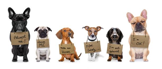 Obdachlosen-Reihe von Hunden zu adoptieren – Foto