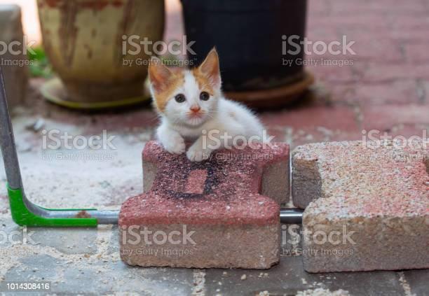 Homeless turkish cats picture id1014308416?b=1&k=6&m=1014308416&s=612x612&h=b57mnyjjhzkk284 fw3gwttpyorm4iaecnmpetqk ye=
