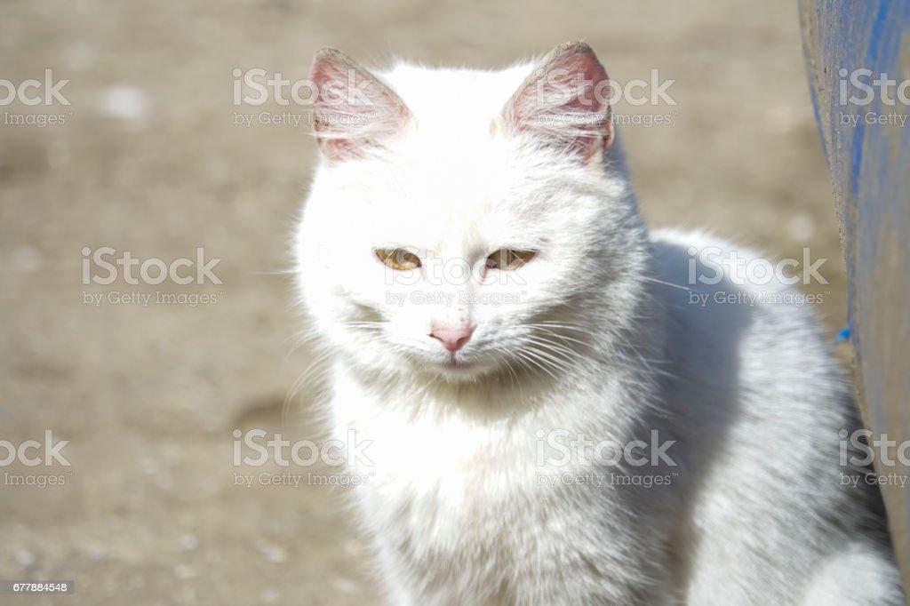 Homeless white cat royalty-free stock photo