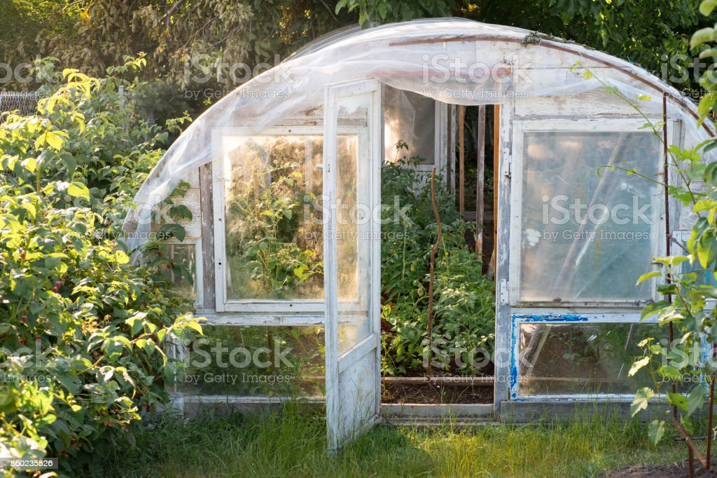 Homemade greenhouse with tomatoes plants inside, Warm sunny day stock photo