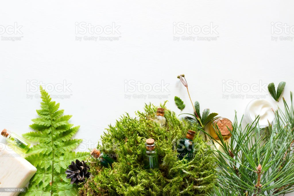 Homemade Natural Cosmetics With Moss Spruce And Fern Stock Photo