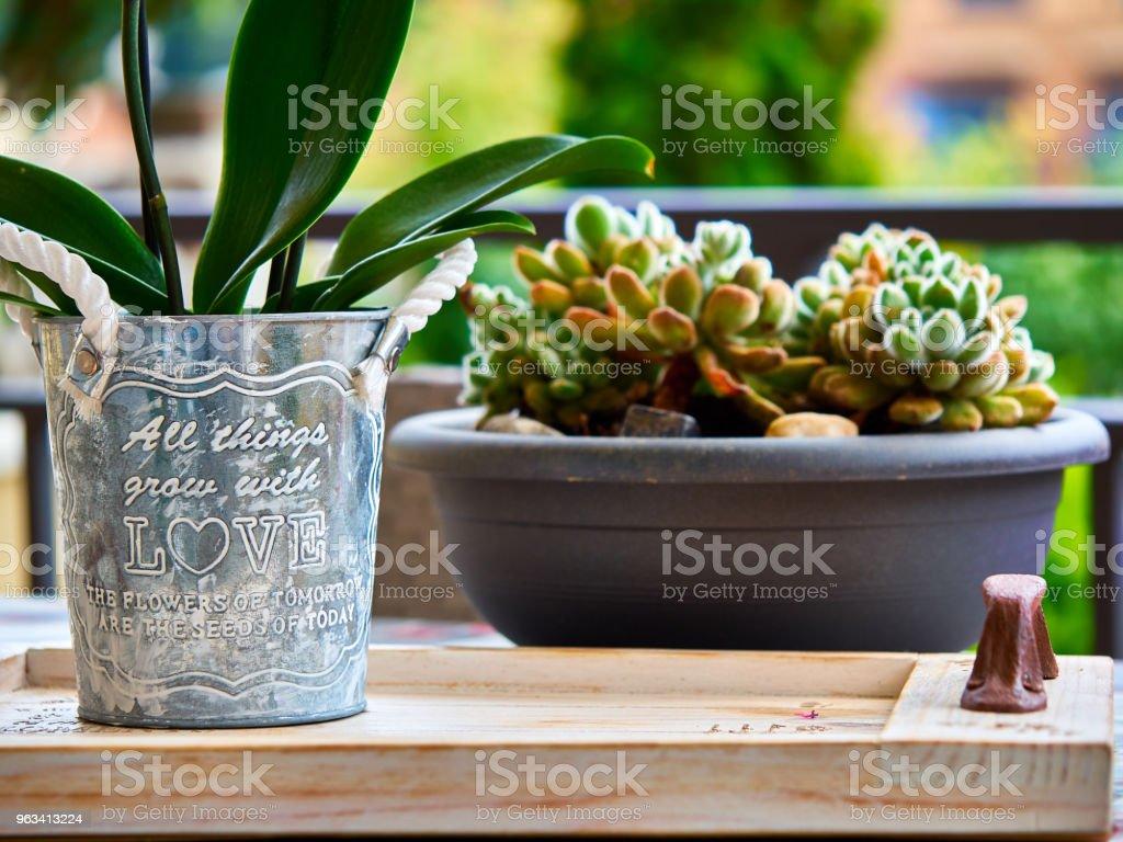 Domowy garnek z wiadomością miłosną i kaktusem w tle - Zbiór zdjęć royalty-free (Sztych)