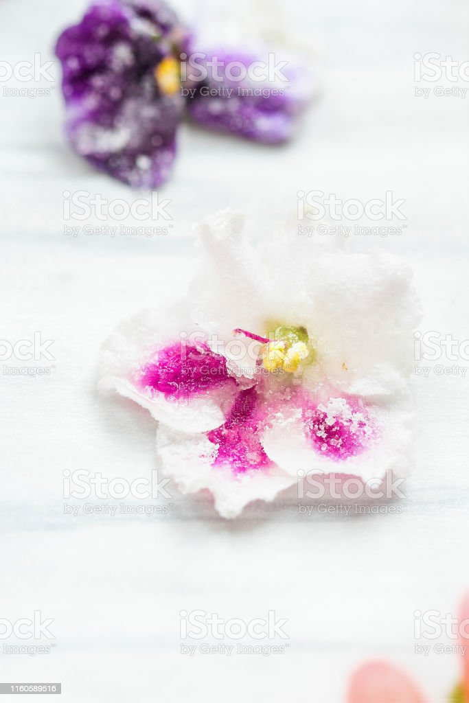 Homemade Sugared Or Crystallized Edible Violet Flowers Stock Photo Download Image Now Istock