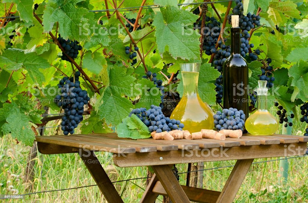 Homemade white and red wine from grapes. Decanters, bottles, corks and grapes photographed against the background of the vine. stock photo