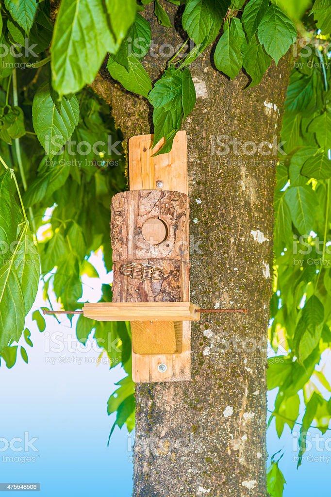 Photo De En Bois De Maison Cabane À Oiseaux Sur Tronc Darbre - Image