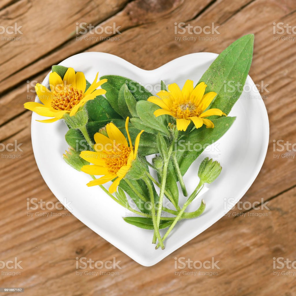 Homeopathy and cooking with arnica stock photo