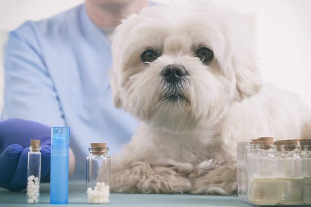 Homöopathie für einen Hund – Foto