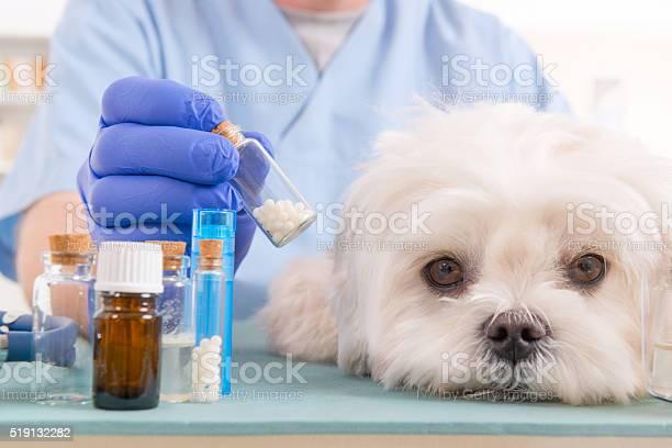 Homeopathy for a dog picture id519132282?b=1&k=6&m=519132282&s=612x612&h=jzwjtbarptkujqjpaxh5jnssnk1ghtcwp1k6jpc2rmy=