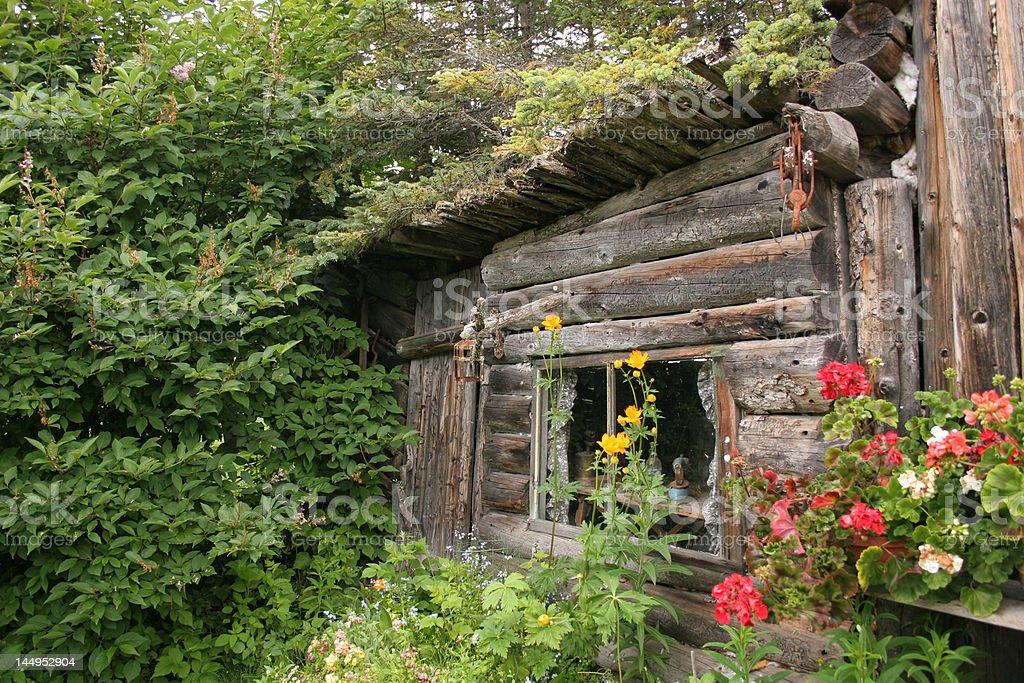 Homesteader's Cabin, Alaska royalty-free stock photo