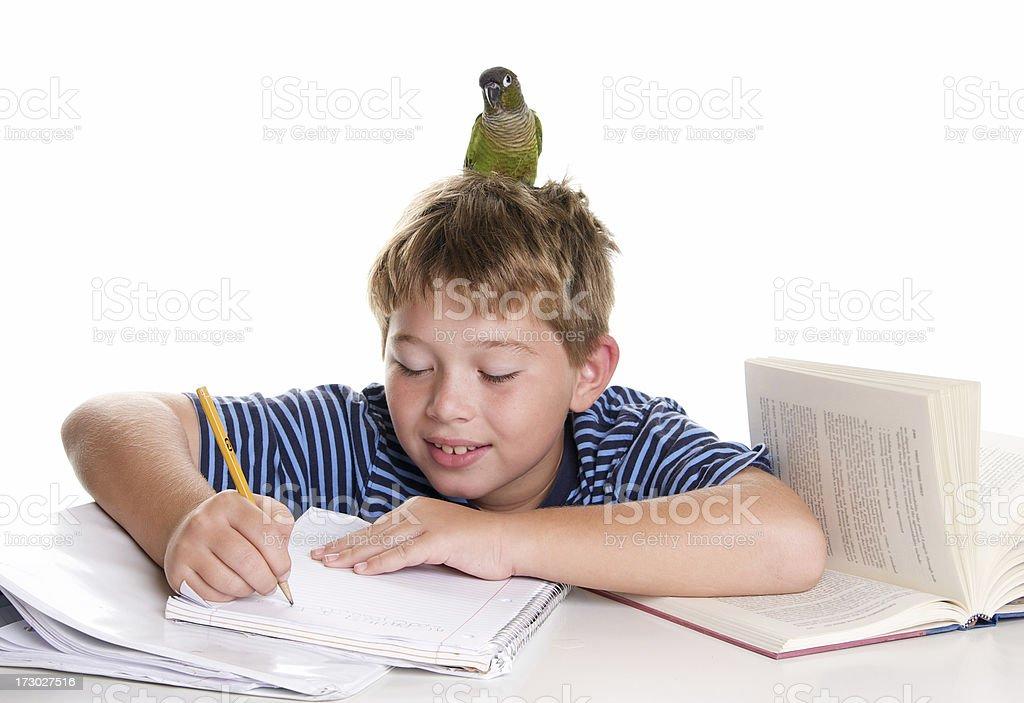 Homework Helper Bird royalty-free stock photo