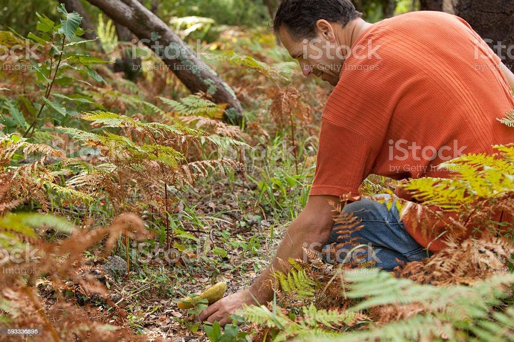 homme dans les bois stock photo