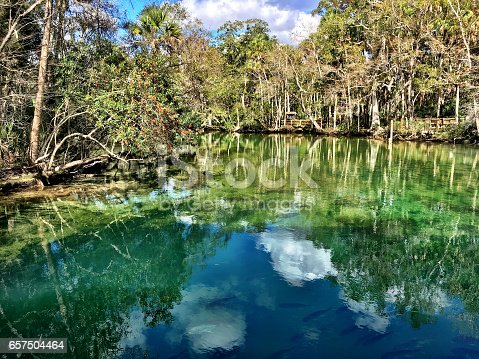 Beautiful reflection at Homosassa Springs Wildlife State Park in Citrus County, Florida. Gulf Coast states, USA.