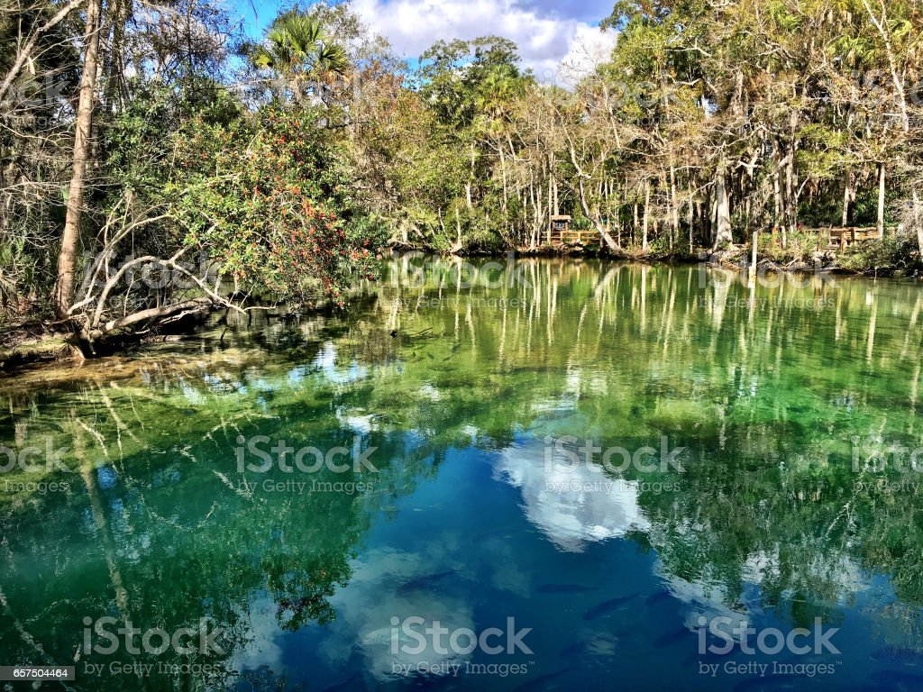 Homosassa reflection stock photo