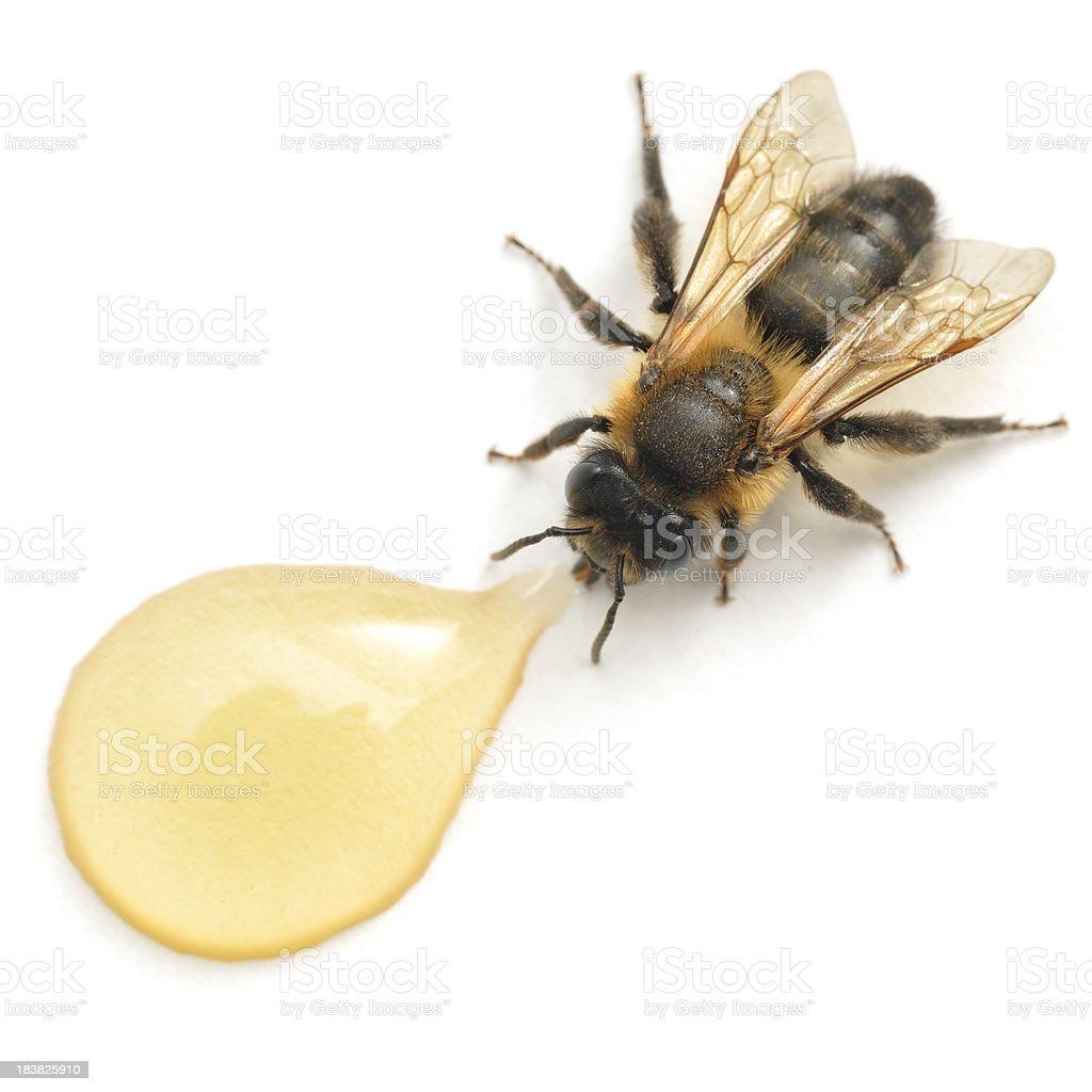 Honey and Bee stock photo