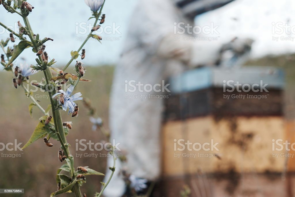 Honey Bee And Beekeeper Background Stock Photo & More Pictures of