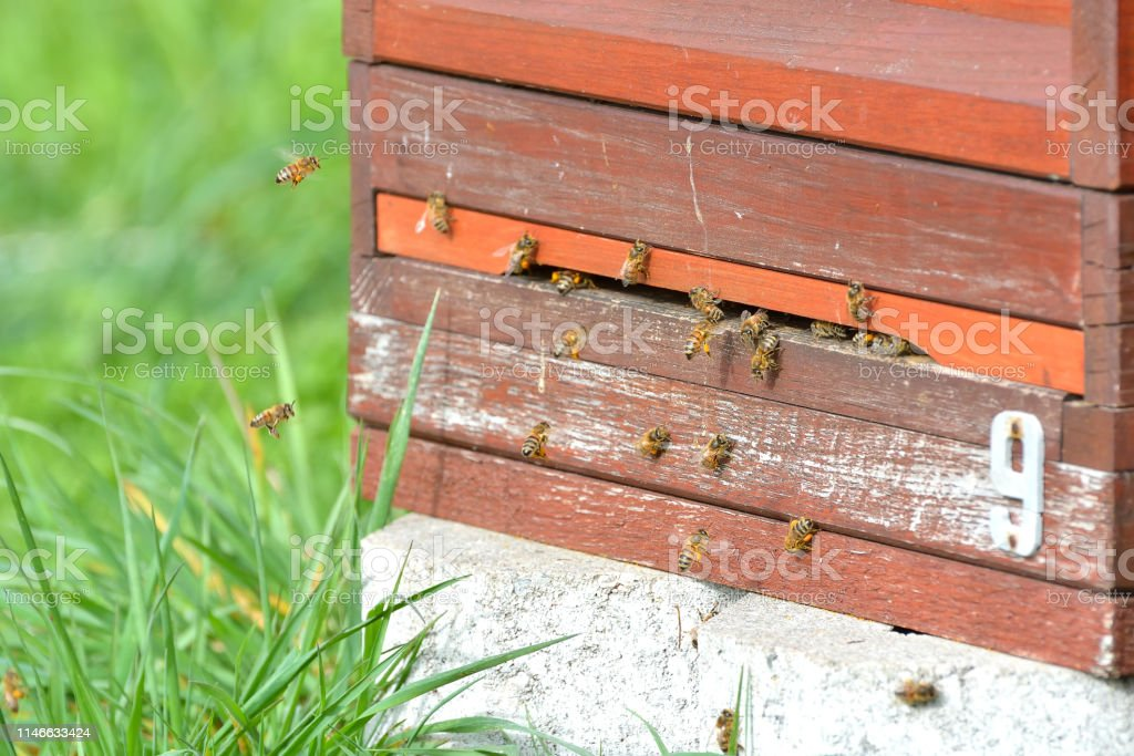 Honey Bee Farming Wooden Beehive In A Natural Outdoor Close