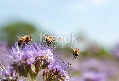 istock Honey bee flying away 110719870
