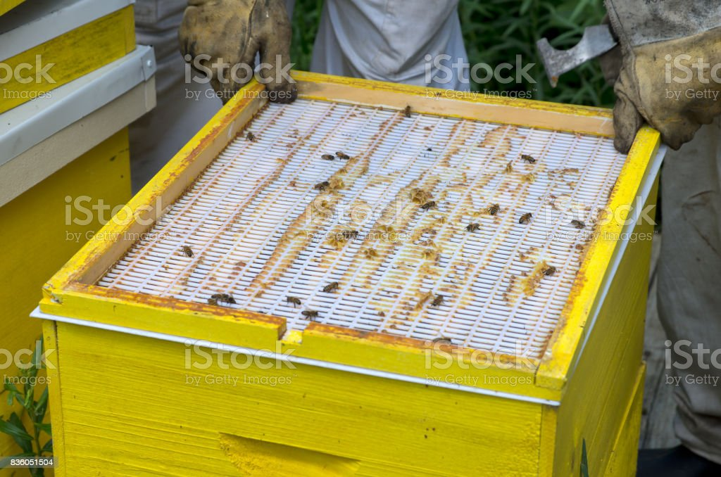 Honey Bee Hive Inner Cover or Crown Board stock photo