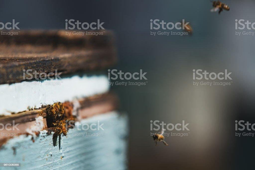 Honey Bee Hives stock photo