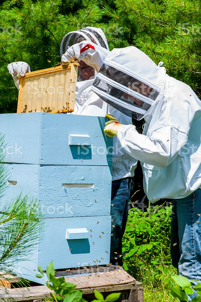 Honey Bee Keepers in the Field with a Hive. stock photo