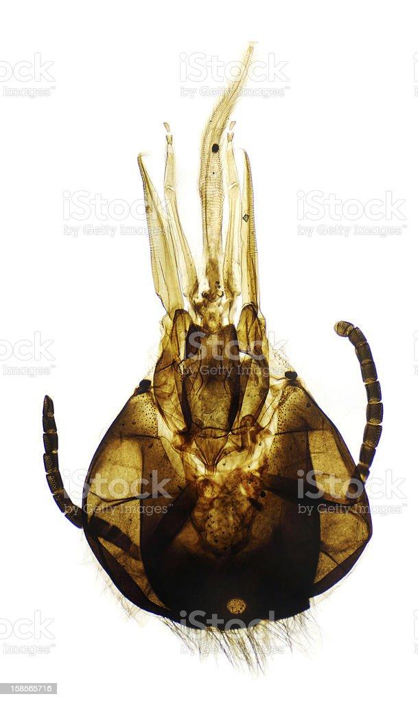 Honey bee moeth parts royalty-free stock photo