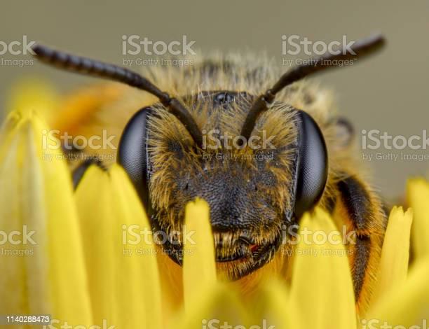 Photo of Honey bee sleep after pollination