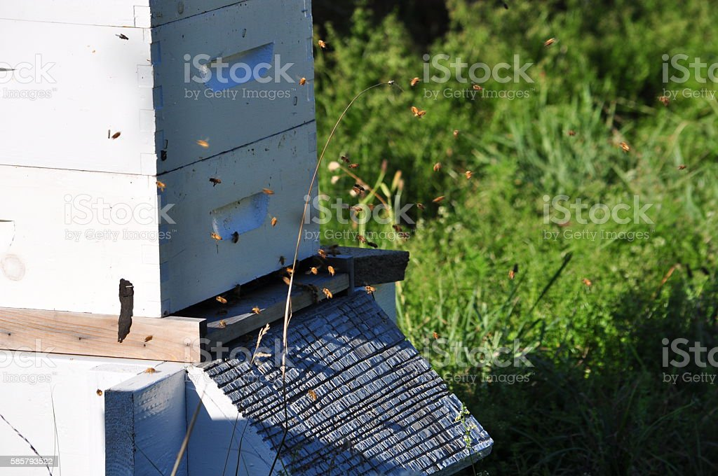 Honey Bees Flying Around Wooden Beehive Stock Photo - Download Image